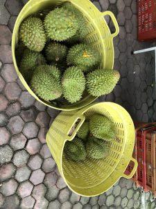 Durian fruit, Vietnam